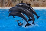 Dolphin Show in Canary Island, Spain